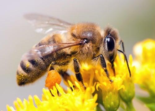 Qué es el polen