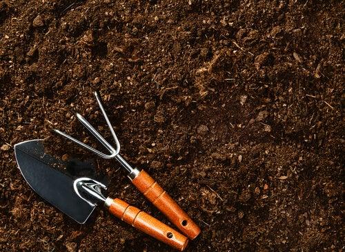 suelo para cultivar arándanos