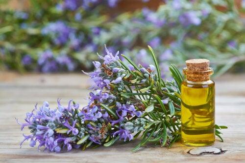 Aceites esenciales que purifican y desintoxican tu cuerpo