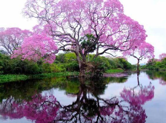 arbre au bord de l'eau.