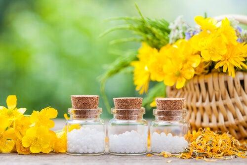 Dos remedios imprescindibles en casa: árnica y caléndula