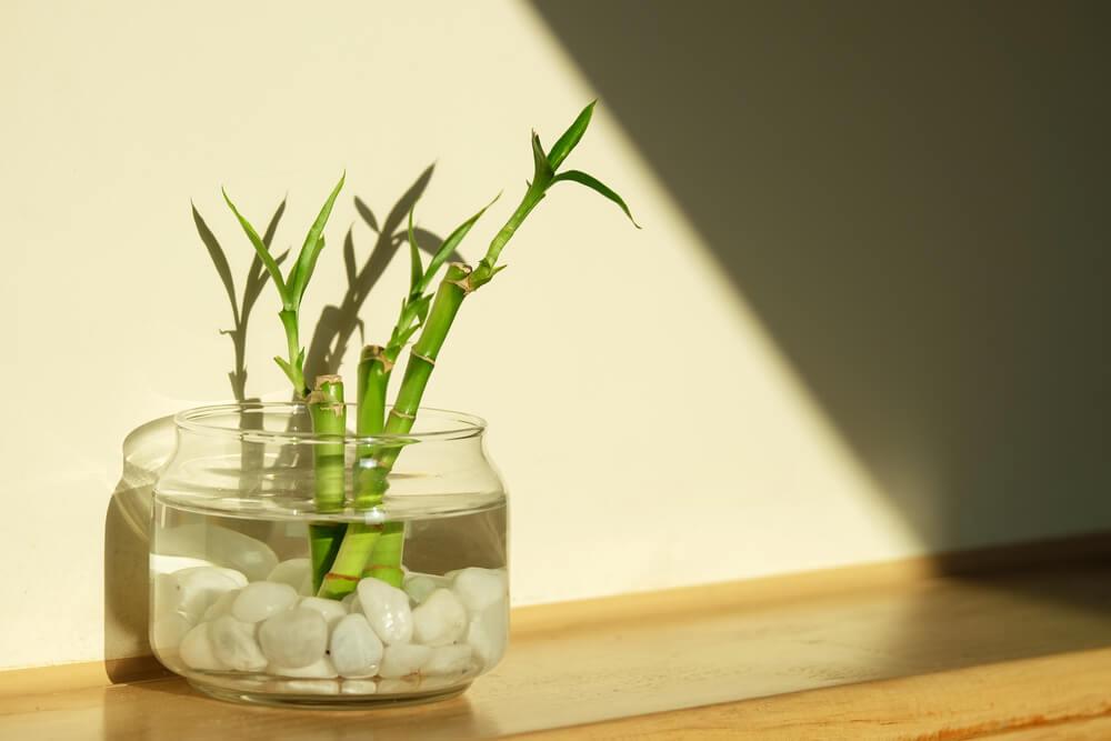 Bambú decorativo en un jarrón.