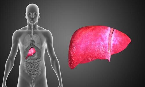 El hígado se resiente si no tomamos suficientes vegetales.