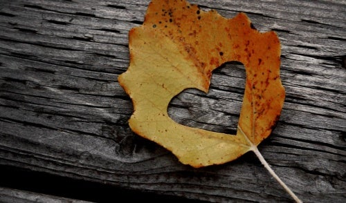Leaf with the shape of a heart