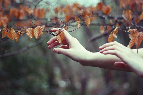 manos-tocando-hojas