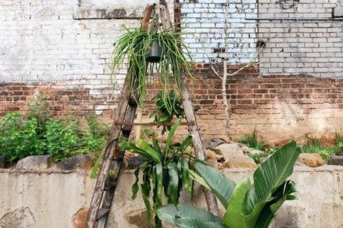 plantas-escalera