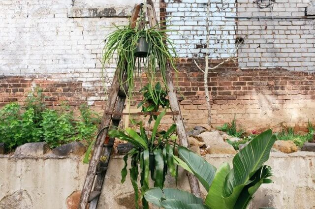Una escalera de madera puede usarse para crear un jardín vertical