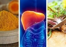 Estas son las 6 mejores hierbas para proteger el hígado