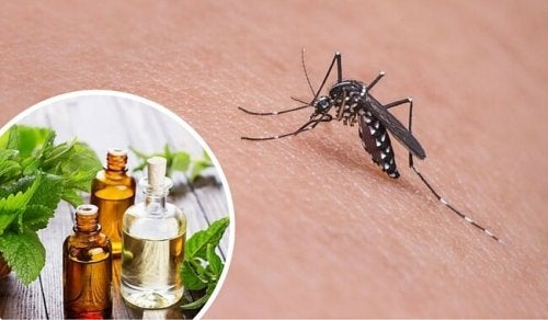 Las 11 mejores hierbas y especias para repeler los mosquitos