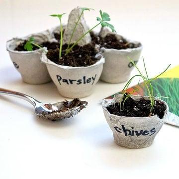 Plantas-huevo