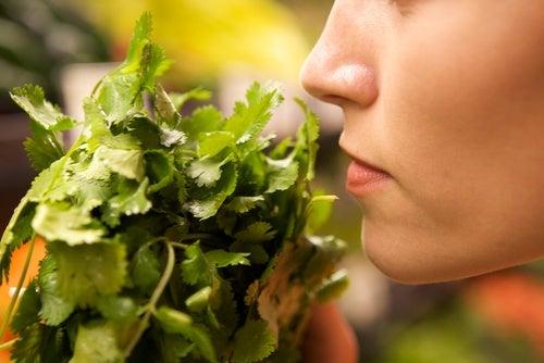 olor de los alimentos
