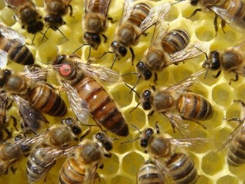 1376242672_535626454_2-Fotos-de--Clases-de-apicultura