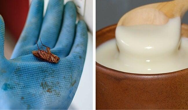 Cómo acabar fácilmente con las cucarachas en tu hogar