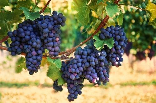 La uva roja