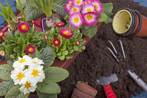 Mejorar tus plantas y jardín