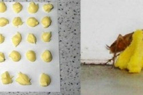 Veneno de ácido bórico y huevo