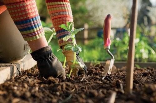 La jardinería quema calorías