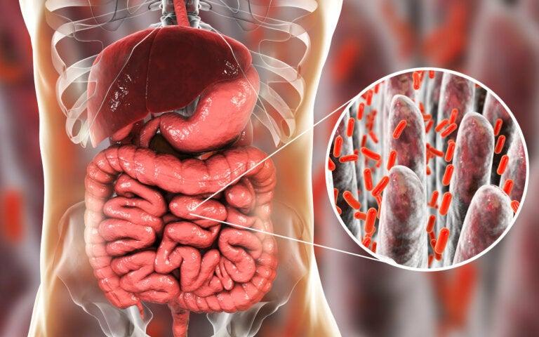 Cómo repoblar la flora intestinal naturalmente