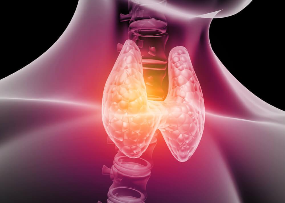 La glándula tiroides.