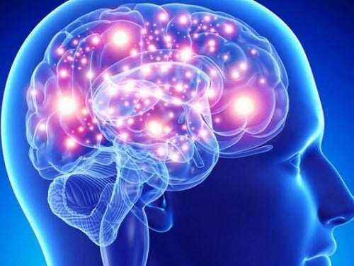 Las mejores hierbas y especias para tu cerebro