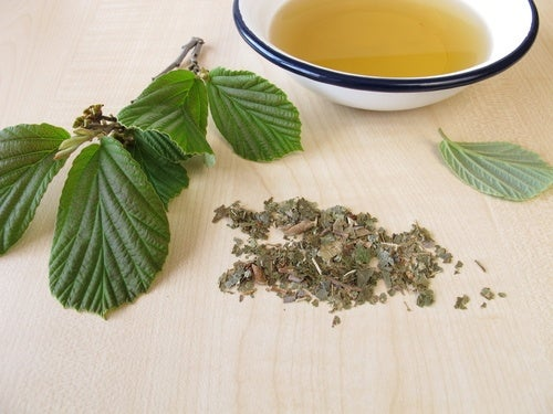 Agua de hammamelis, remedio casero para aliviar el dolor de varices