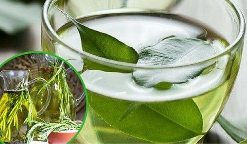Esto es lo que logras en tu cuerpo al echar una simple gota de aceite de orégano en el té