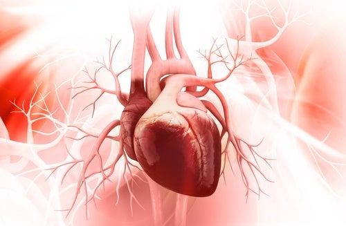 Protege la salud cardiovascular
