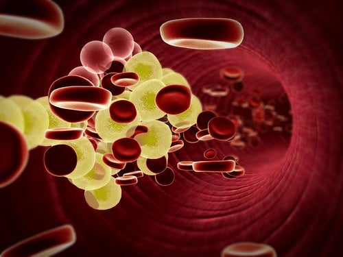 Regula el colesterol