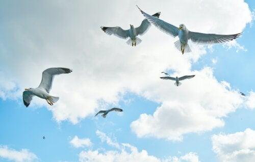 Todos nacimos con alas pero, a veces, la vida nos las arranca