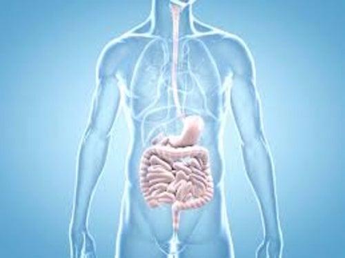 bifidus-flora-intestinal