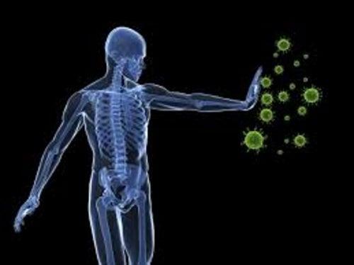 bifidus-sistema-inmunitario