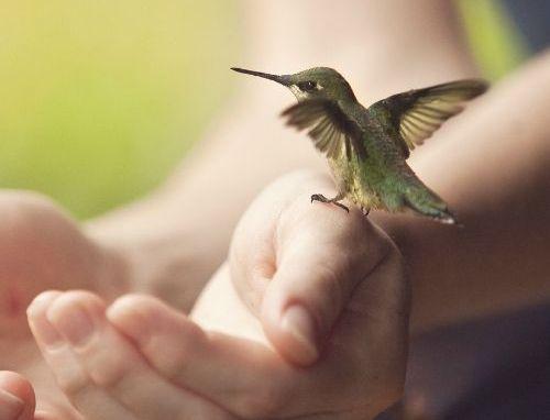 manos-pájaro