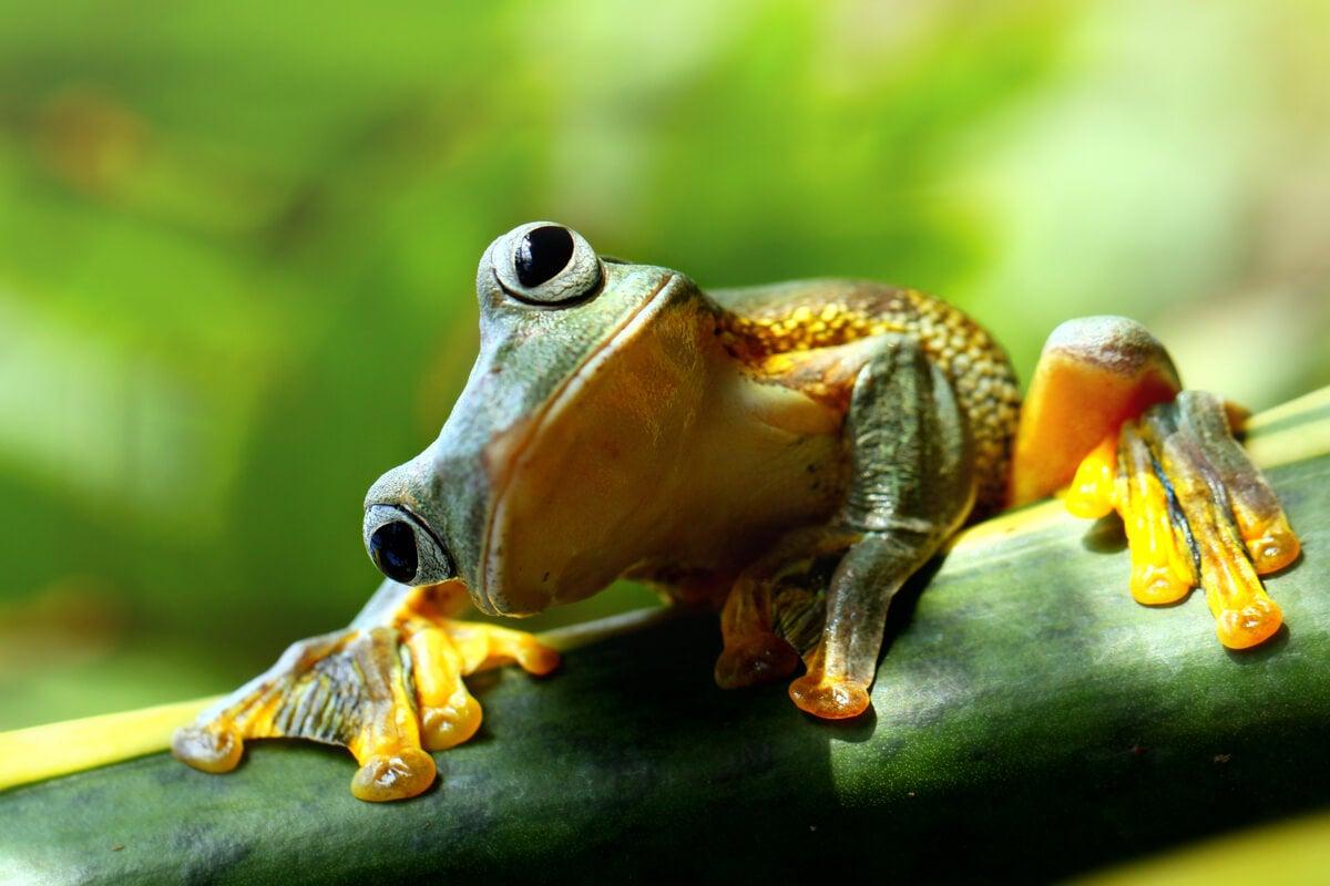 El síndrome de la rana hervida: incapaces de reaccionar al maltrato sutil