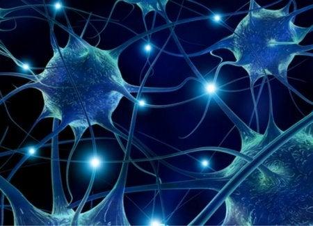 7 alimentos que favorecen la conectividad neuronal