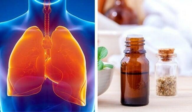 Cómo limpiar el sistema respiratorio con aceite de orégano - Mejor ...