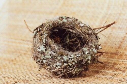 El síndrome del nido vacío: cuando la soledad impregna el hogar