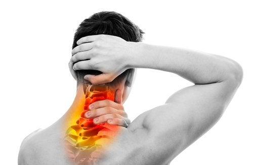 La relación entre la columna vertebral y los órganos – Mejor con Salud