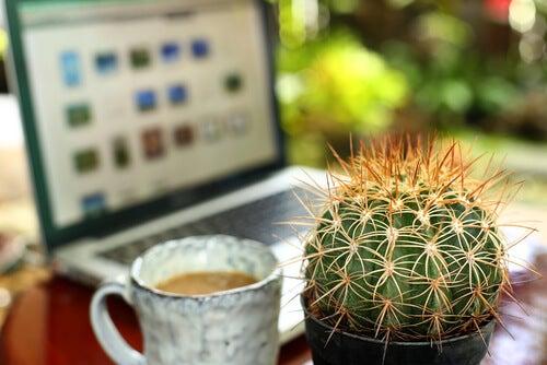 Los cactus son muy decorativos.