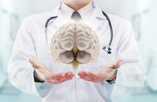 el tálamo del cerebro
