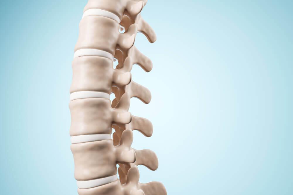 Columna vertebral humana.