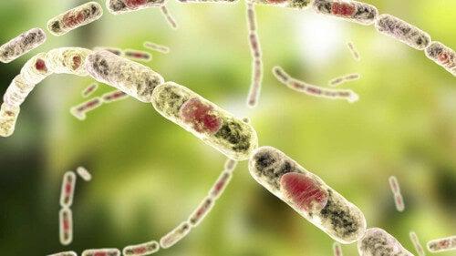 Un nuevo patógeno descubierto en África causa una enfermedad similar a la del ántrax