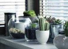 plantas-que-ayudarán-a-que-la-energía-positiva-fluya-en-tu-casa