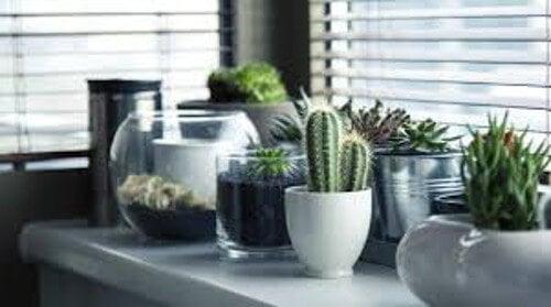 4 plantas que ayudarán a que la energía positiva fluya en tu casa