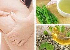 7 plantas medicinales para combatir la celulitis