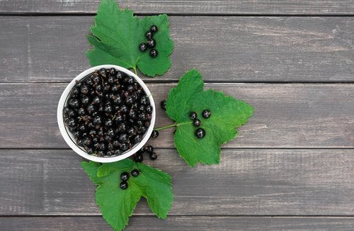 El grosellero negro es uno de los mejores antiinflamatorios naturales
