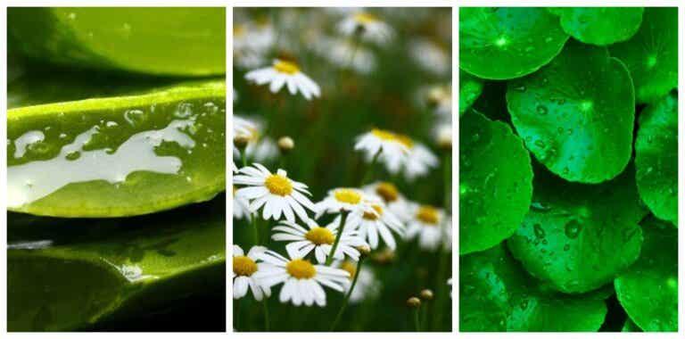 ¿Hay plantas que pueden curar y cicatrizar tus heridas?