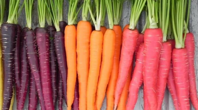 Grandes propiedades de la zanahoria todo lo relacionado con la salud