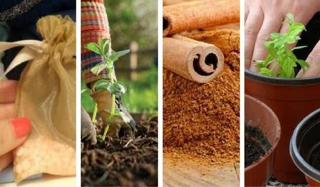 7 curiosos usos alternativos que le puedes dar a la canela