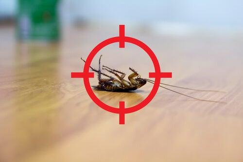 Cómo combatir las cucarachas sin matarlas