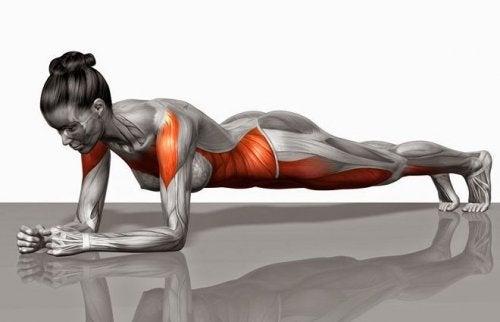 Implicados plancha abdominal musculos